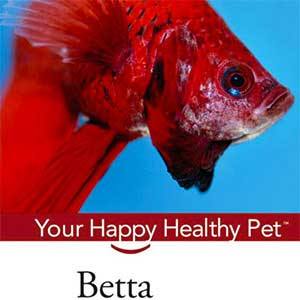 this is a book review on the book betta happy healthy pet the betta is that really colorful fish with long flowing fins usually found in the small cups - Colorful Fish Book