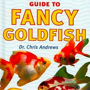 Guide to Fancy Goldfish