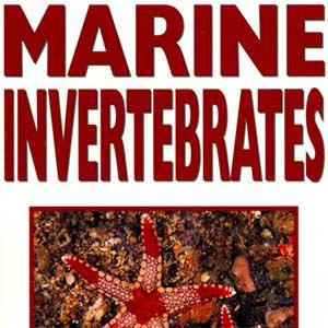 500 Marine Invertebrates