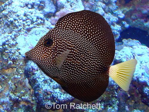 Fishlore Com S Saltwater Aquarium E Book