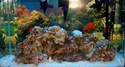 Saltwater Aquarium with Live Rock