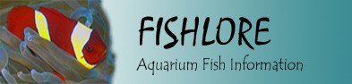 Tropical Fish Tank and Aquarium Fish Information