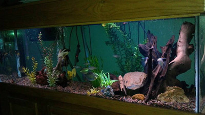 125 Gallon Community Fish Tank