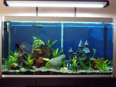 84.5 Osaka Cichlid Aquarium