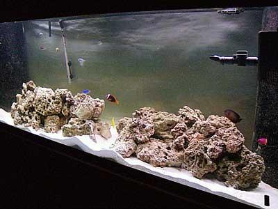 Aquarium of the Month