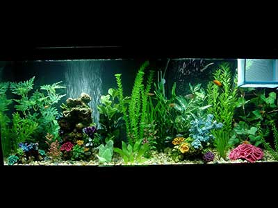 55 Gallon Tropical Fish Tank