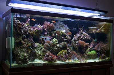75 Gallon Reef Aquarium