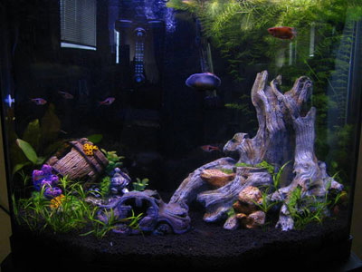 26 Gallon Bowfront Aquarium