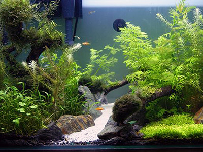 2 foot 75 litres planted tank