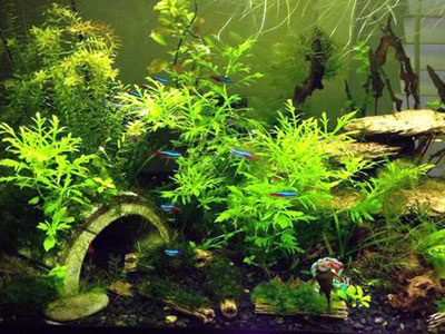 Planted Jungle