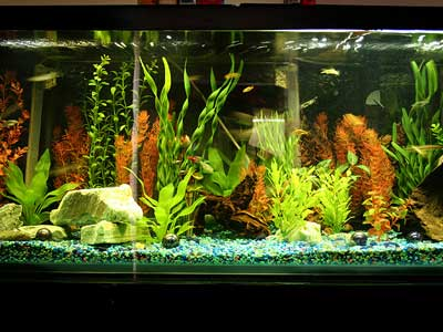 70 Gallon Tropical Community Fish Tank
