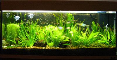 180 Liter Planted Tank
