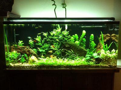 55 Gallon Aquarium