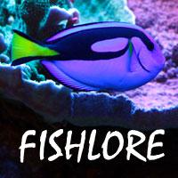 Rainbowfish Sexing Rainbowfish 215939