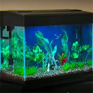Freshwater aquarium setup guide fish tank setup for Setting up a fish tank