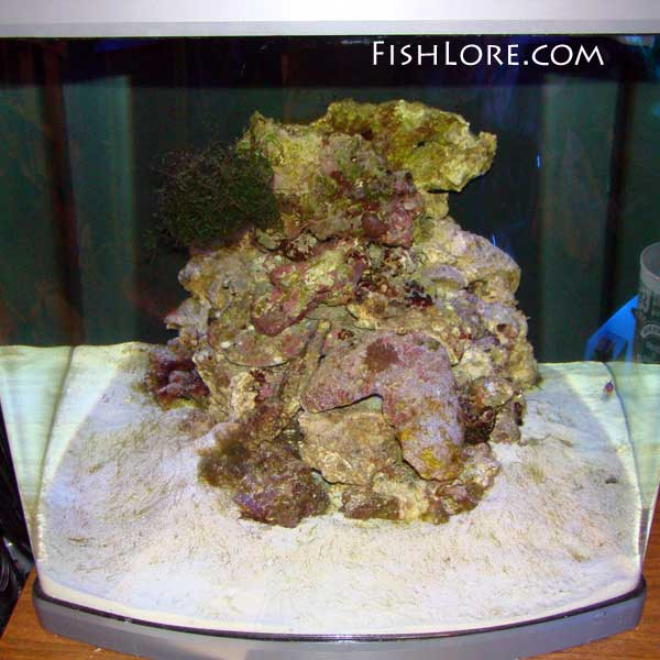 FishLore com's Saltwater Aquarium e-Book