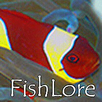 FishLore Tropical Fish Information and Care