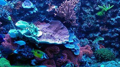 Reef Tank Scene