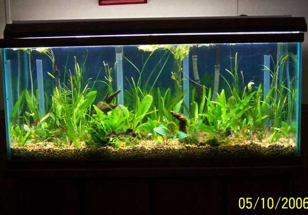 Freshwater Fish 2 5 Gallon Tank Betta Aquarium Joy