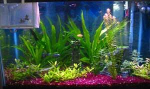 Alex's Fish Tank