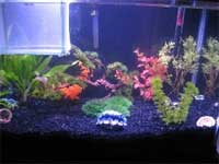 Beth's Fish Tank