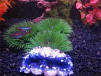 Beth's Aquarium