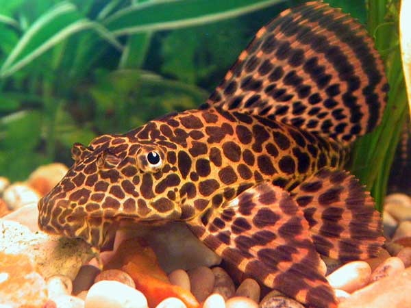 Tropical Fish Tanks Page 4
