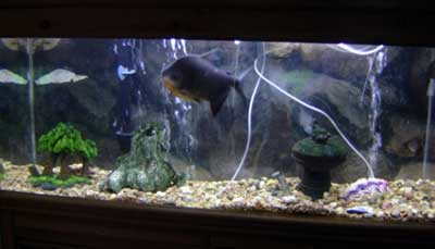 Brenda's Fish Tank