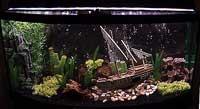 Calv's Bowfront Aquarium