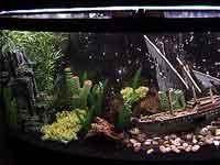 72 gallon Bowfront Aquarium