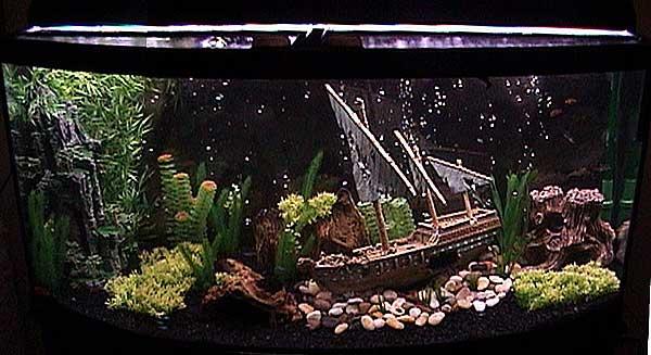 Tropical Fish Tanks Page 5