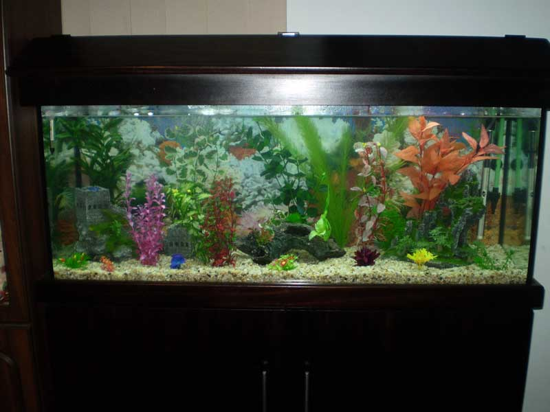 Bl system how many fish in a 55 aquaponics tank info for Shark fish tank