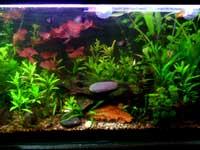 Chenthil's Aquarium