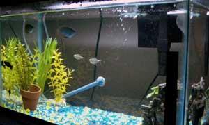 Daves Aquarium
