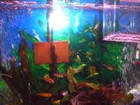 Debbie's Fish Tank