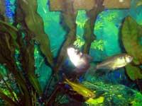 Debbie's Aquarium