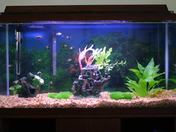 tropical fish tanks page 7