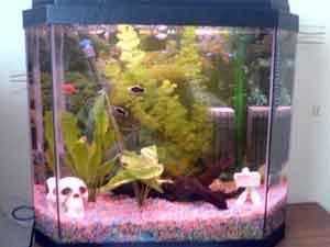 Gaz Fish Tank