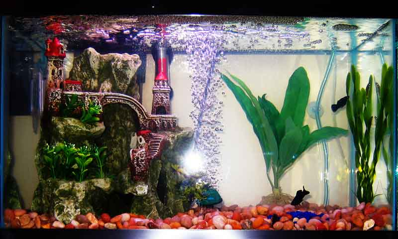 Tropical fish tanks page 19 for 10 gallon koi tank