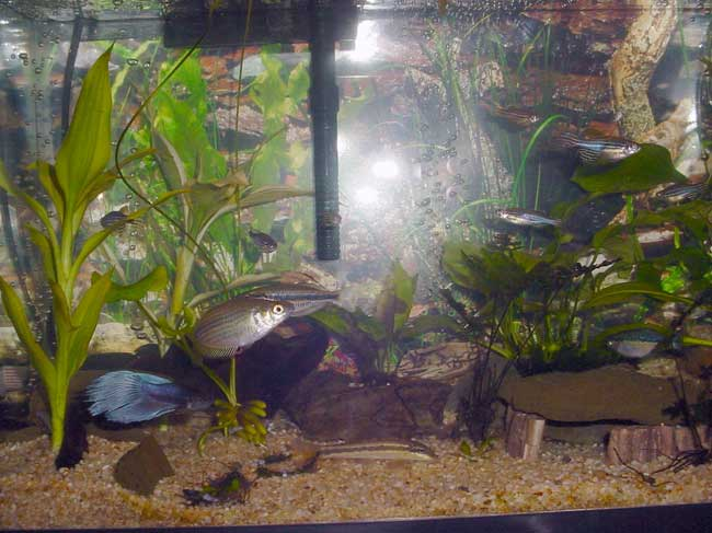 Tropical fish tanks page 20 for Jims exotic fish