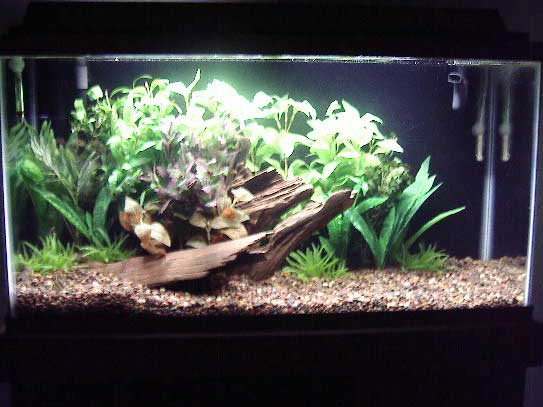 Tropical fish tanks page 3 for Exotic fish tanks