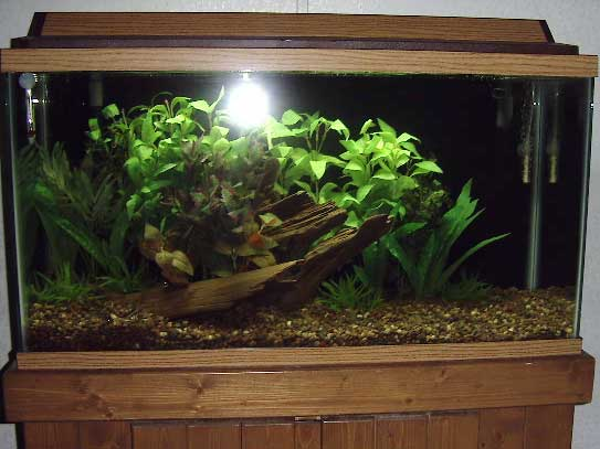 Tropical fish tanks page 3 for 38 gallon fish tank
