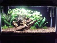 Joey's Aquarium