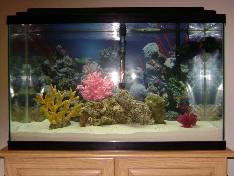 Tropical fish tanks page 23 for 4 gallon fish tank