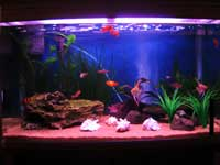 Kevin's Aquarium