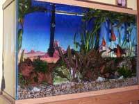 Paul's Aquarium