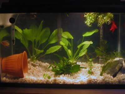Richard's Fish Tank