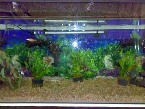 Riche's Aquarium
