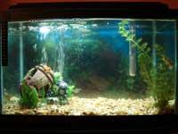 Adam's Fish Tank
