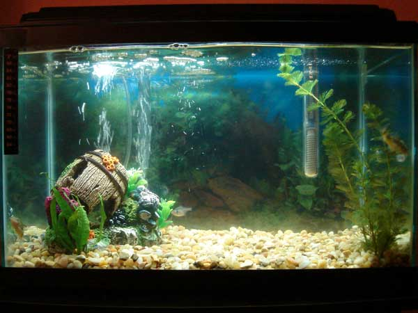 Tropical fish tanks page 15 for 10 gallon fish tank with filter